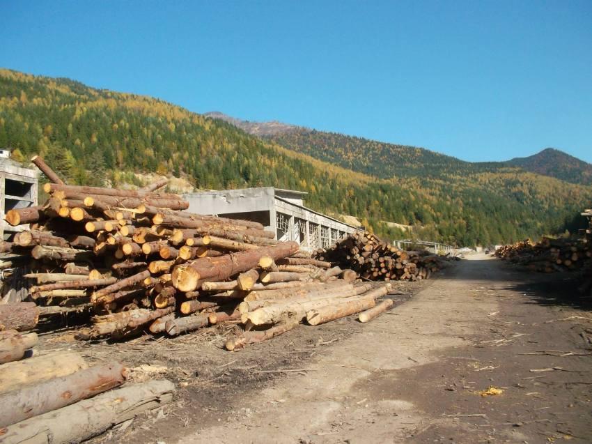 baia borsa lemne