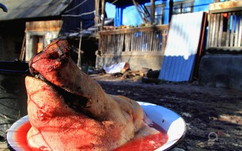 Tăierea porcului – o tradiție