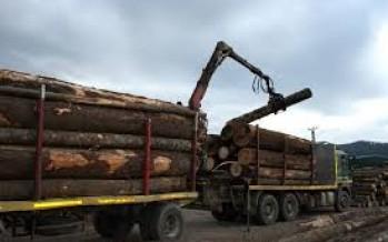 Amenzi în valoare de 7810 lei pentru transport ilegal de material lemnos