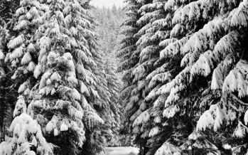 Totul este alb afară