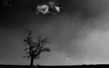 Copac fumând