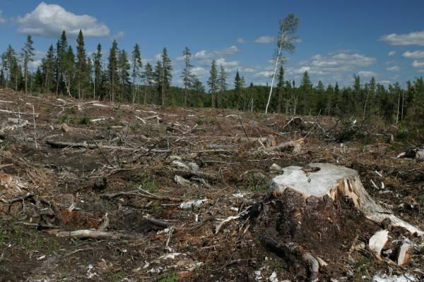 Statul Mafiot România contra Naturii