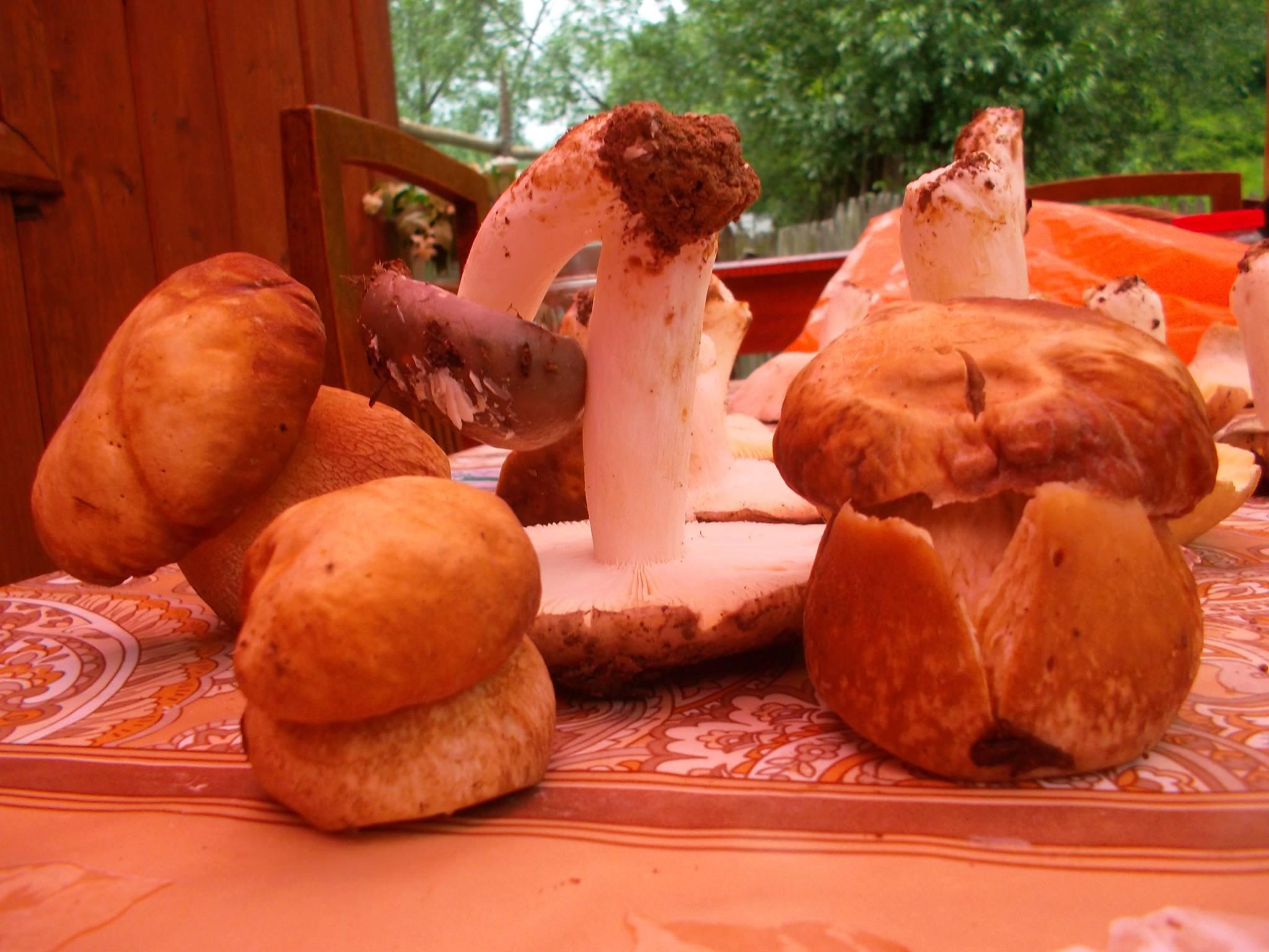 Dupa avalansa de intoxicatii. Ciupercile comercializate in Maramures, verificate de autoritati