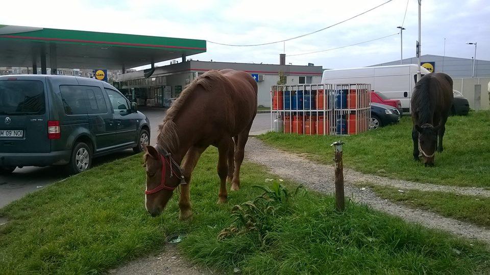 Doi cai se plimbă prin oraș… poate merg și ei la vot…