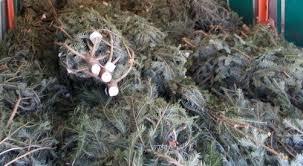 Polițiștii au confiscat 20 de pomi de Crăciun