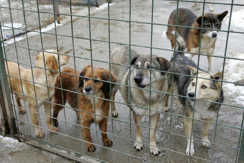Cu girofarul după câinii comunitari